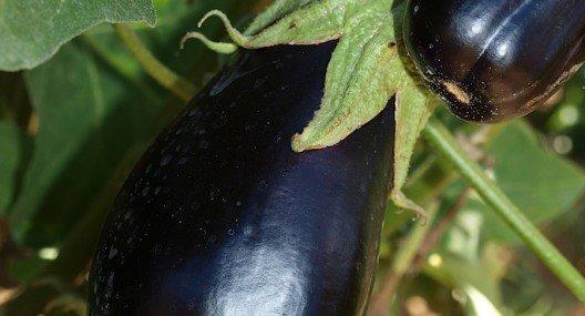 Croatian Cooking Fried eggplant {Pohana balancana}