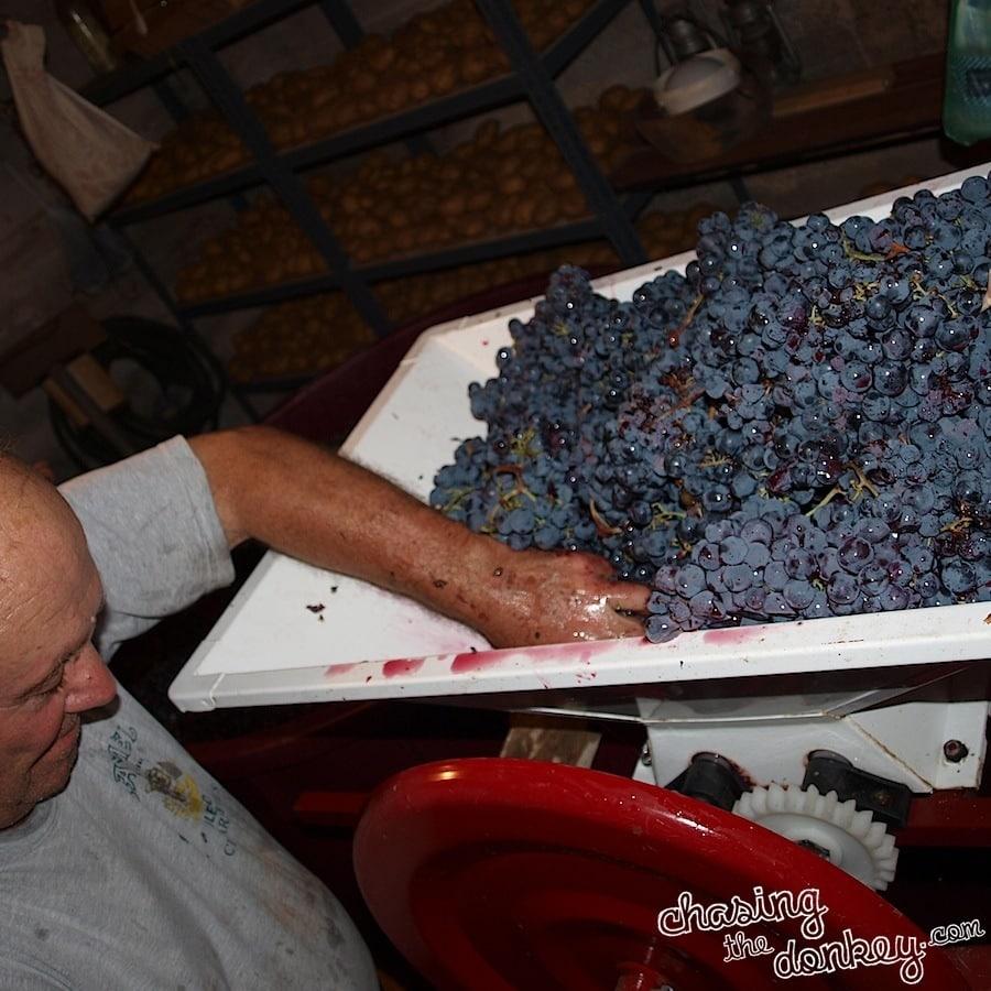 expat wine making
