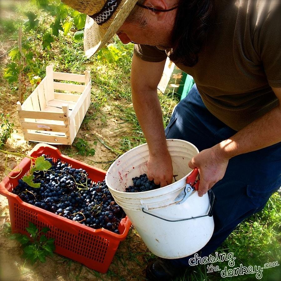 summer garden wine making in croatia