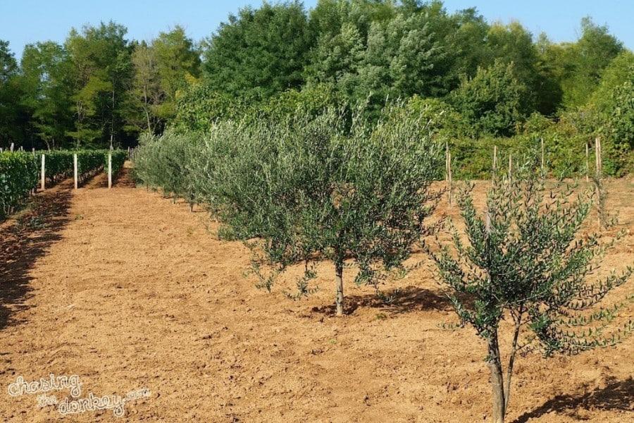 expat olive garden