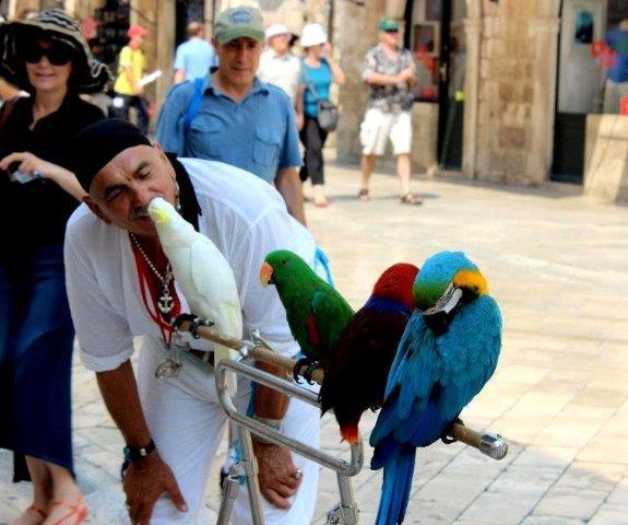 Dubrovnik markets ashley hubbard