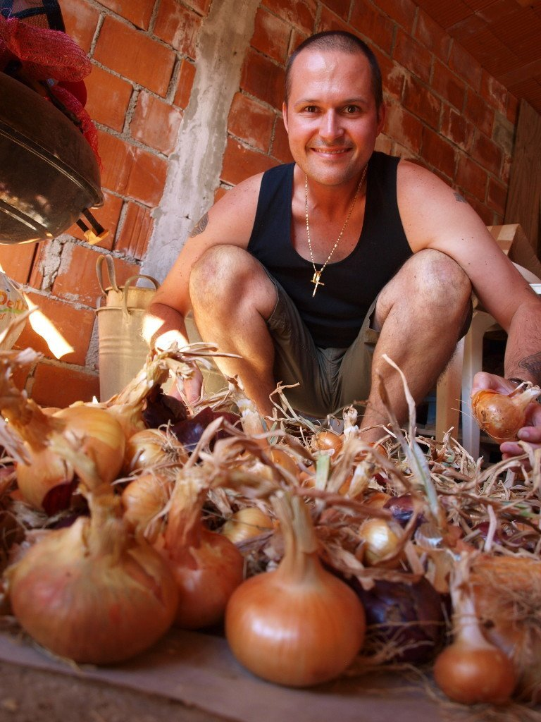 Home grown onions #Croatia- Chasing the Donkey