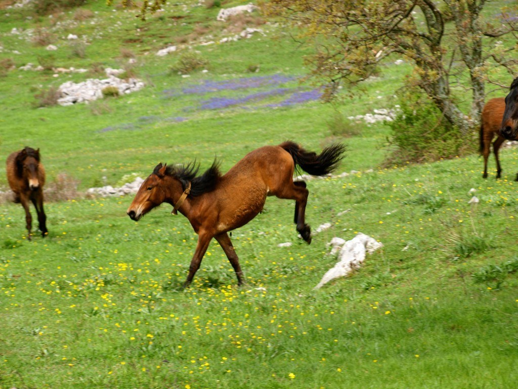 Paklenica Velebit photo jeep safari brown horses - Chasing the donkey Croatia Travel Blog