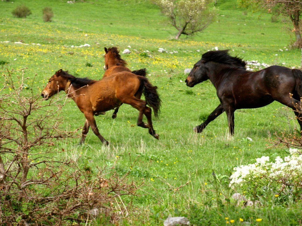 Paklenica Velebit photo jeep safari chasing horses - Chasing the donkey Croatia Travel Blog