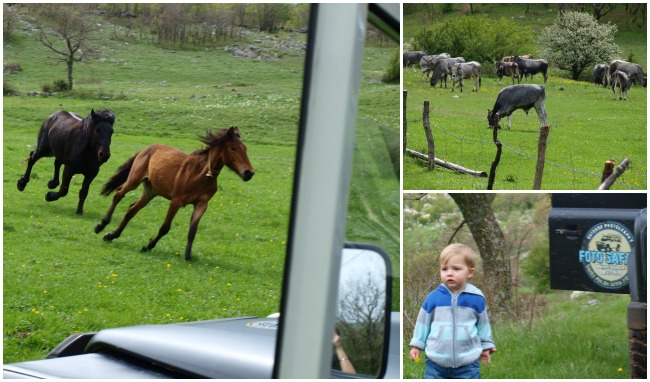 Starigrad Paklenica Velebit photo jeep safari more horses