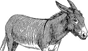 Black and White Donkey transparent