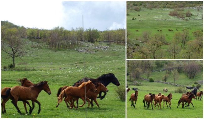 Paklenica Velebit photo jeep safari wild horses - Chasing the Donkey Croatia