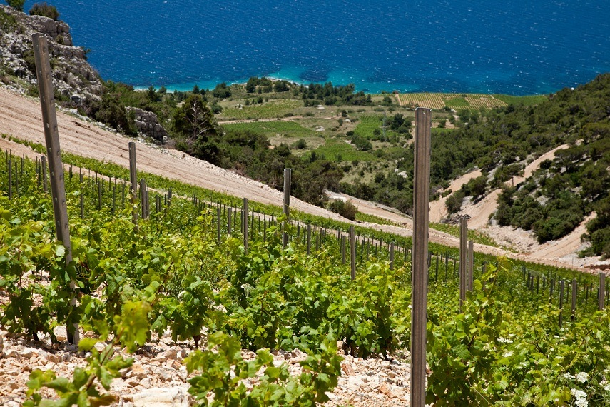 Croatian Wine - The sunshine helps - Travel Croatia like a local