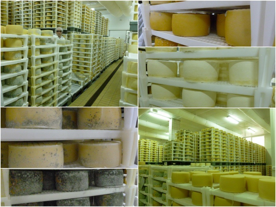 cheese factory pag island