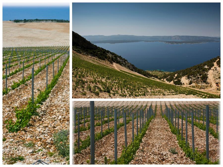 stina winery vineyards - Chasing the Donkey