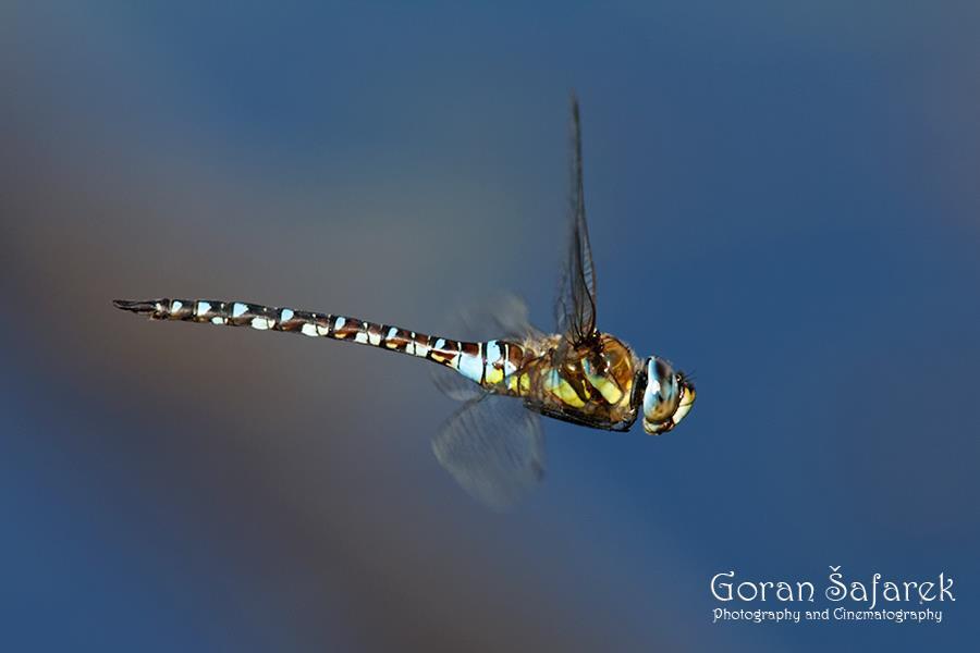 Travel to Croatia: Nature and Animals - Photo Credit Goran Šafarek