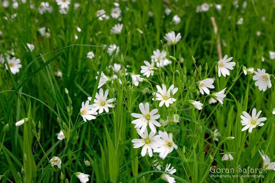 Travel Croatia flowers