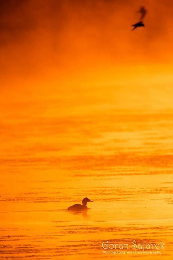 Duck Travel Croatia: Nature and Animals - Photo Credit Goran Šafarek