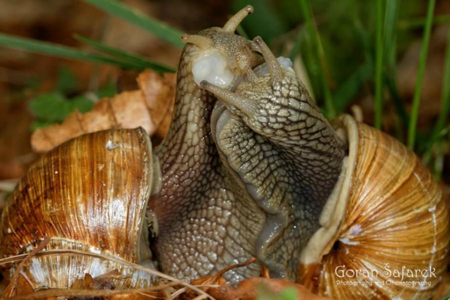 Snails Travel Croatia: Nature and Animals - Photo Credit Goran Šafarek