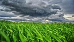 Green Grass Davor Strenja Photography