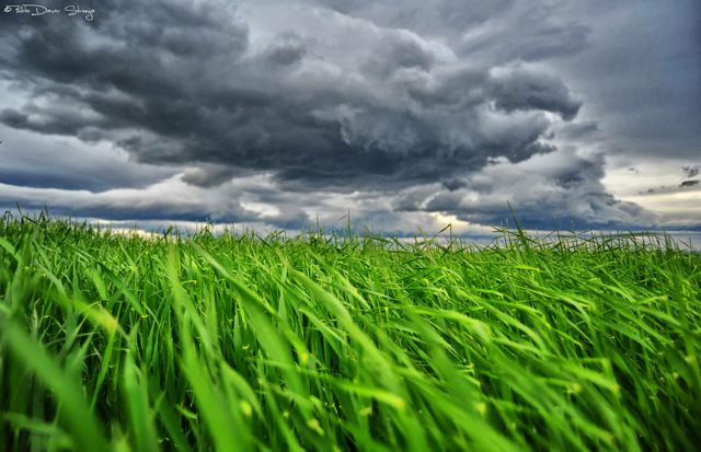 Green Grass Davor Strenja Photography