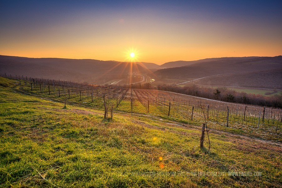 Sunsets in Croatia | Zigante Vineyard | Tim Ertl