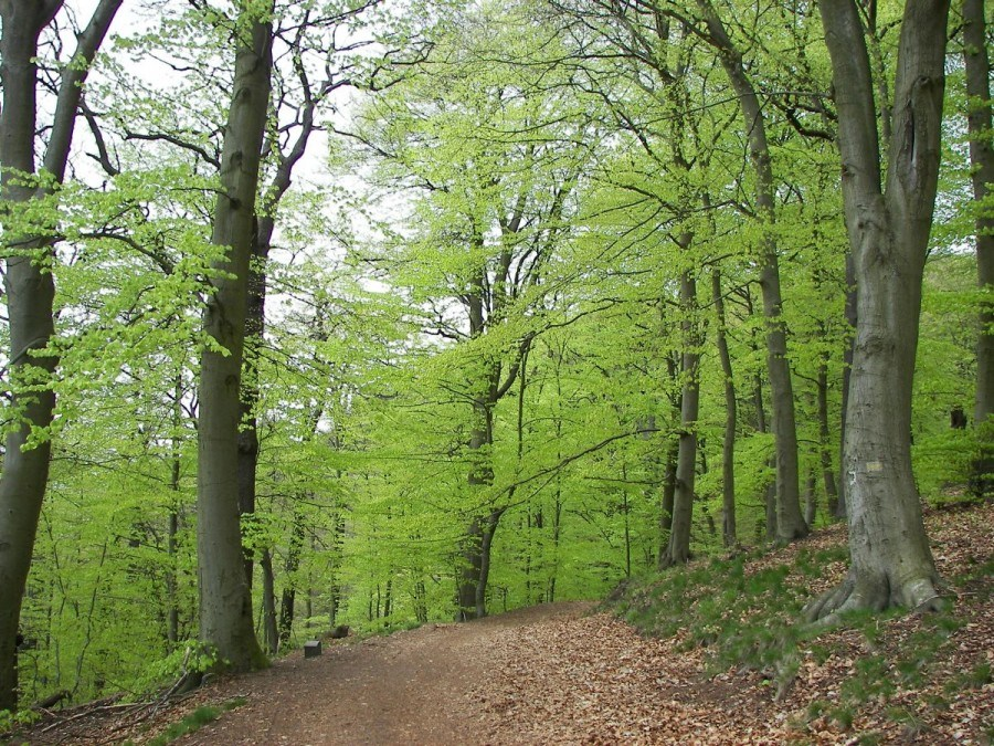 Beech Forrest | Travel Croatia Guide