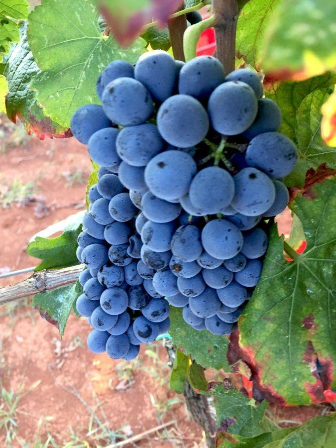 Bruno Trapan Wine   Croatia Travel Blog Chasing the Donkey