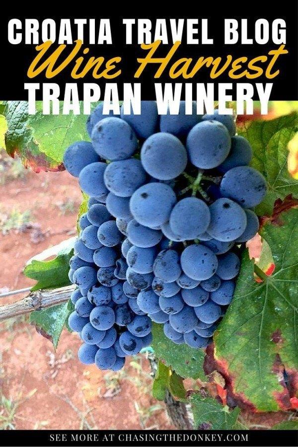Croatian Wine Bruno Trapan Winery | Chasing the Donkey Croatia Travel Blog