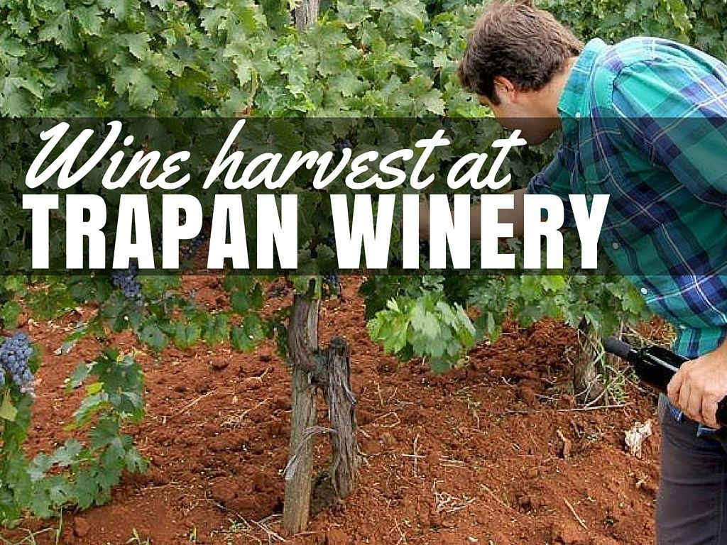 Croatian Wine Bruno Trapan Winery Experience | Croatia Travel Blog