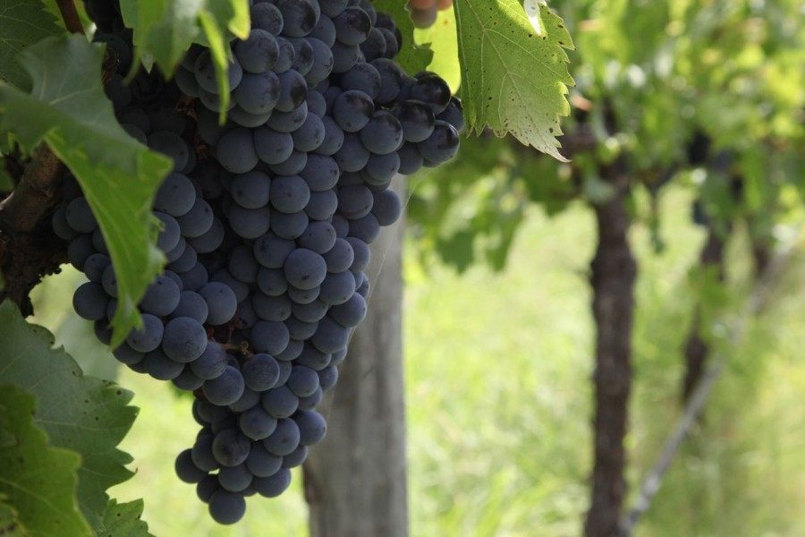 Croatian Wine Regions - 2
