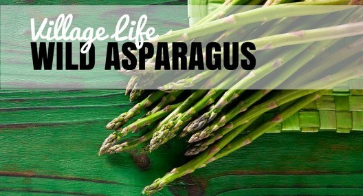 Village Life: Wild Asparagus