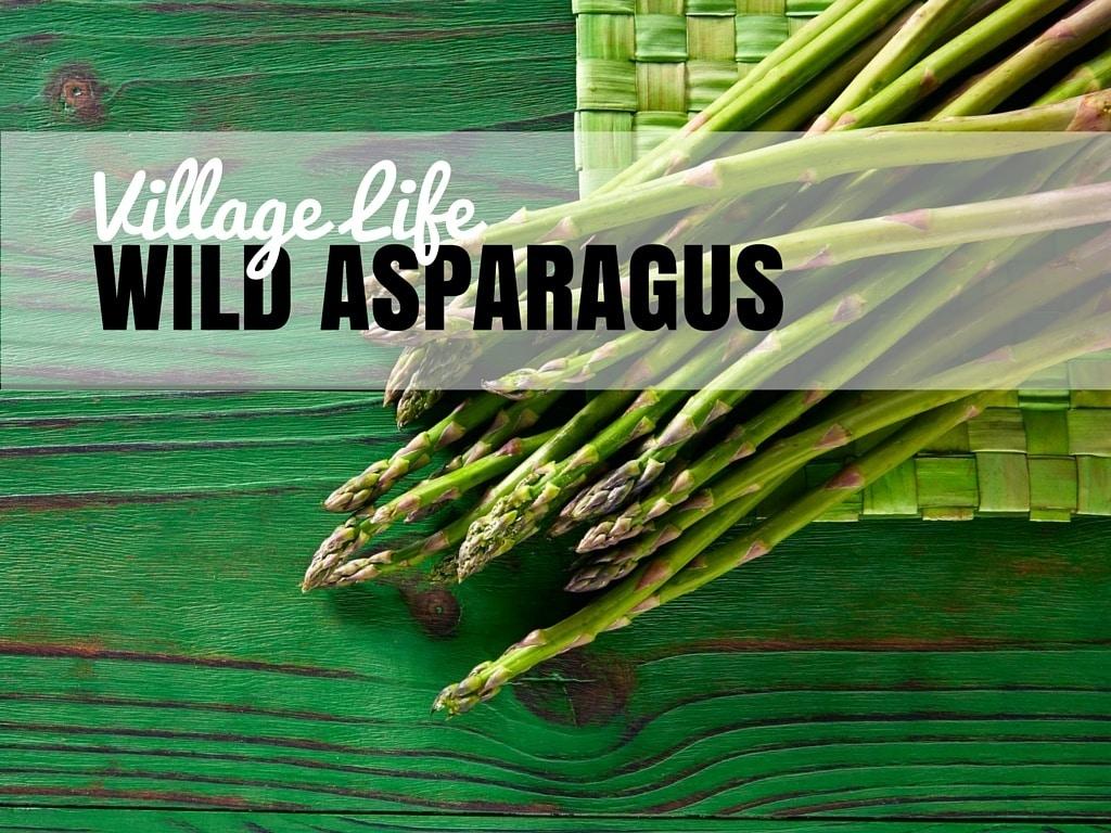 Village Life | Wild Asparagus | Chasing the Donkey Croatia Travel Blog