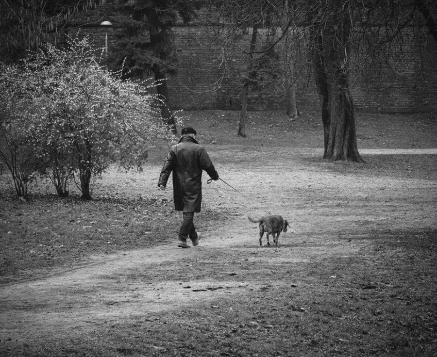 dogs chasing through the - photo #44