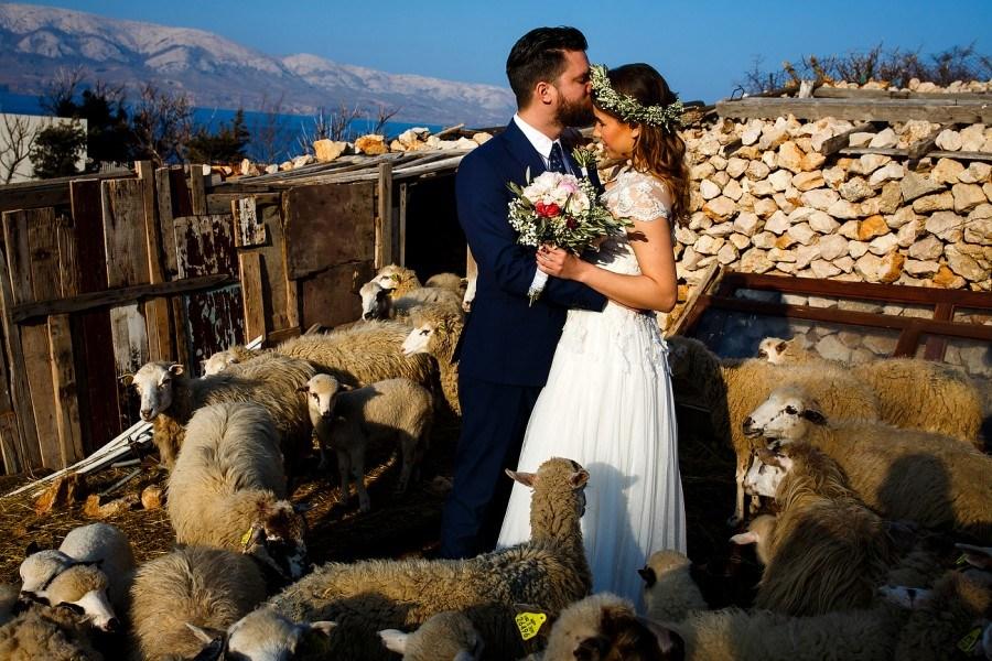 Sheep Pasture Fields Destination Wedding, Pag | Croatia Travel Blog