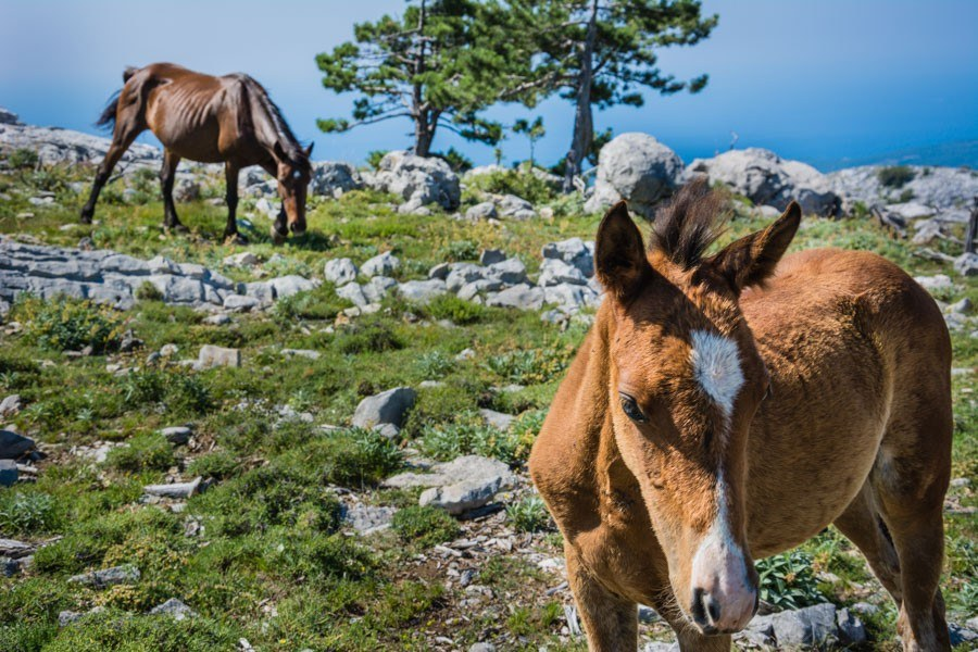 Orebic Croatia | Croatia Travel Blog
