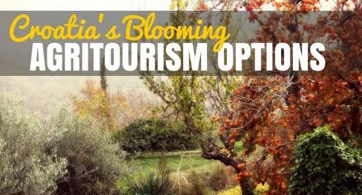 Agritourism Croatia: Grapes, Olives & More