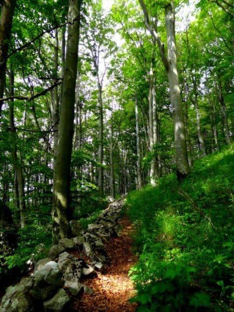 nova-gorica-slovenia-green | Slovenia Travel Blog