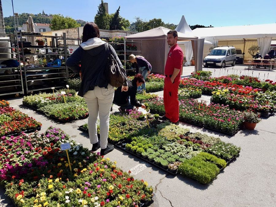 Things to do in Labin - Flower Fair Flowers - Travel Croatia