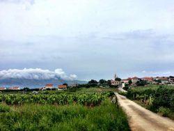 Best Croatian Wine - 5 Grapes_Lombarda Korcula Dalmatia