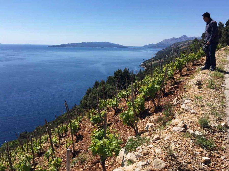 Best Croatian Wine - 5 Grapes_Matt Overlooking Dingac Dalmatia