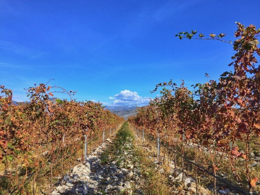 Fun Things to do in Podgorica, Montenegro - Wines