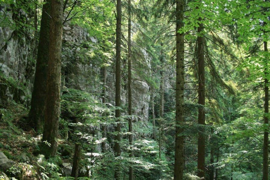 Forest Park Golubinjak Forest