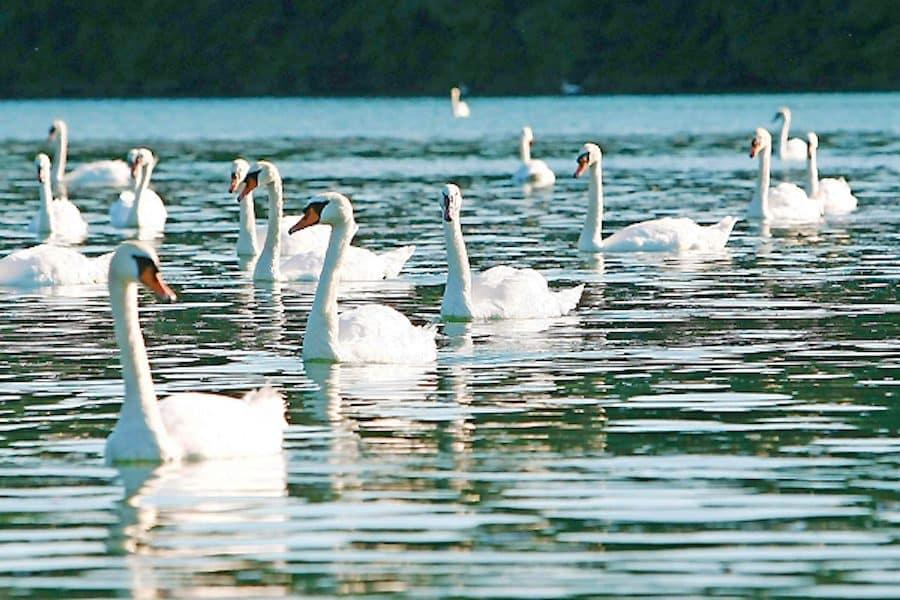 Slovenia Travel Blog_Things to do in Slovenia_Six Slovenian Lakes Other Than Bled_zbiljsko-jezero