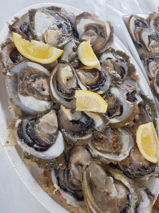 Oysters in Mali Ston Oysters Croatia