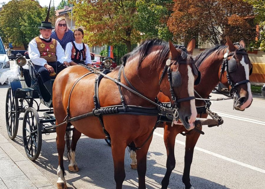 Horse Ride Visit Slavonia Welcome In Županja
