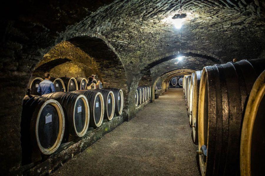 Kutjevo Wine Cellar