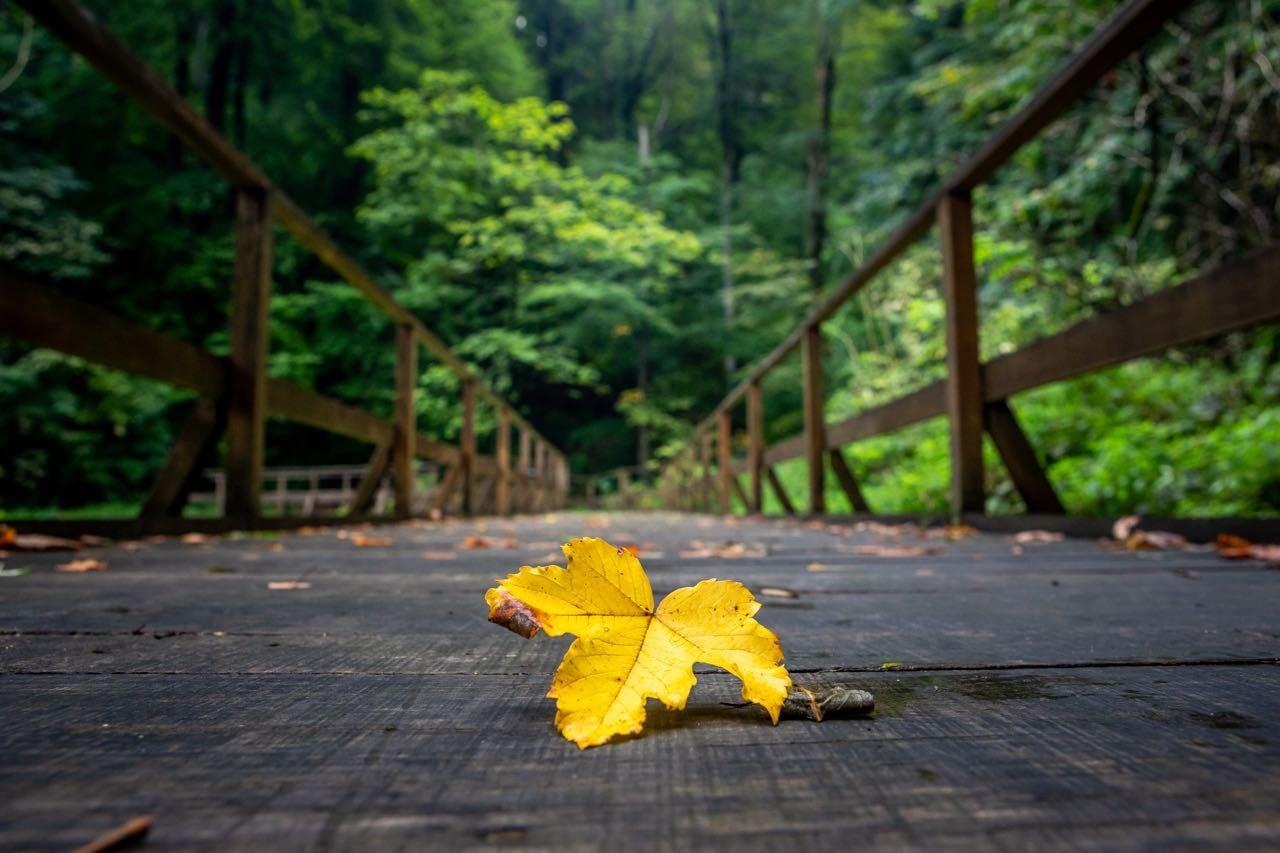Papuk Nature Park_Leaf_julien.jpg