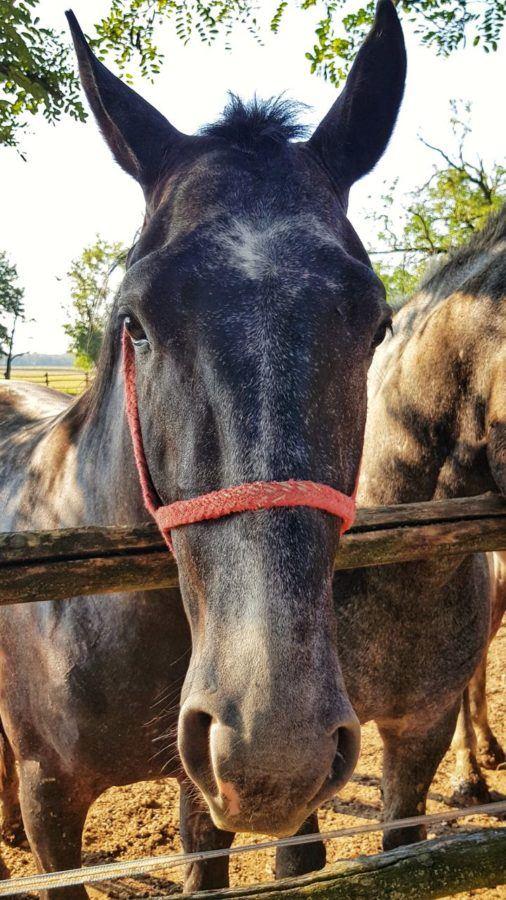 Things To Do In Slavonia Croatia - State Stud Farm Đakovo