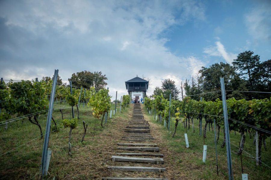 Visit Slavonia Kutjevo Vineyard