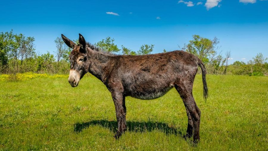 Colours Of Istria Trip Donkey 3 (1)