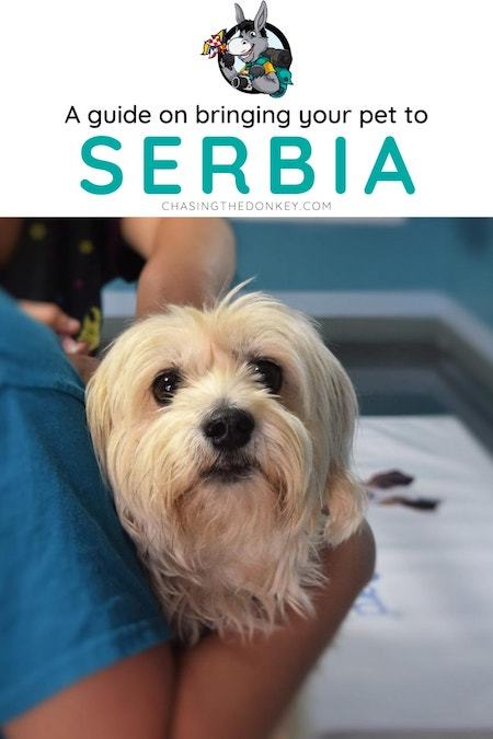 Serbia Travel Blog_What to do in Serbia_How to Travel with Pets to Serbia