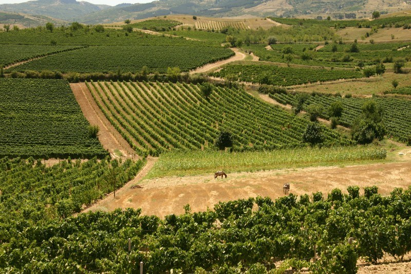 Macedonian wine_Kavadarci vineyards