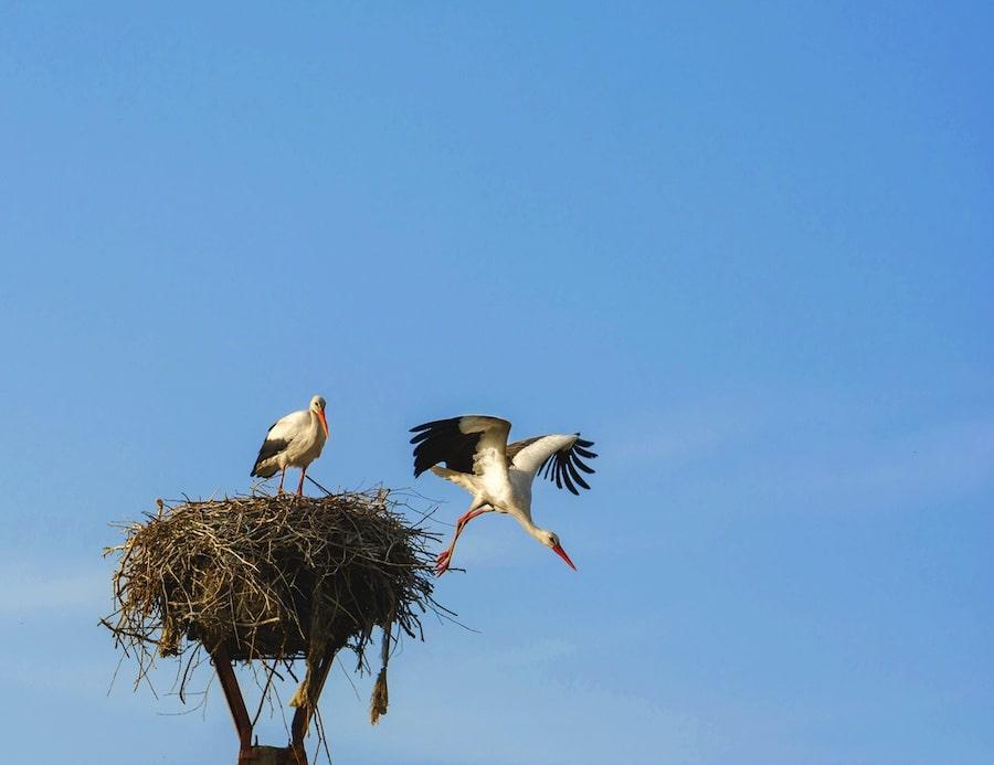 Things To Do In Tulcea, Romania - Danube Delta Cruise