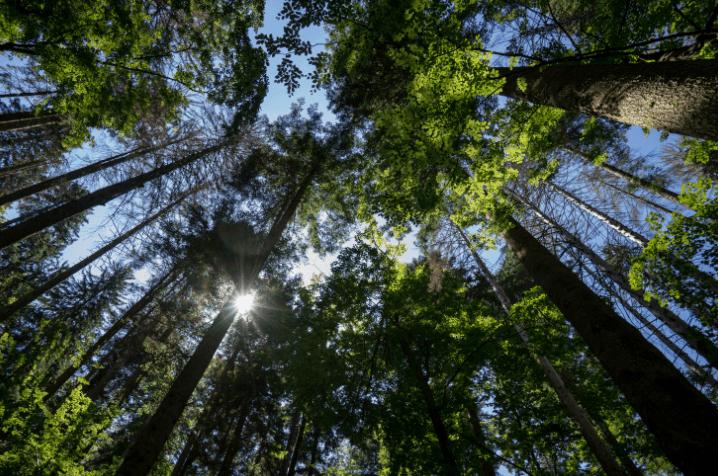 Wellness Retreats In Croatia - Photo Credit: Linden Tree Retreat & Ranch